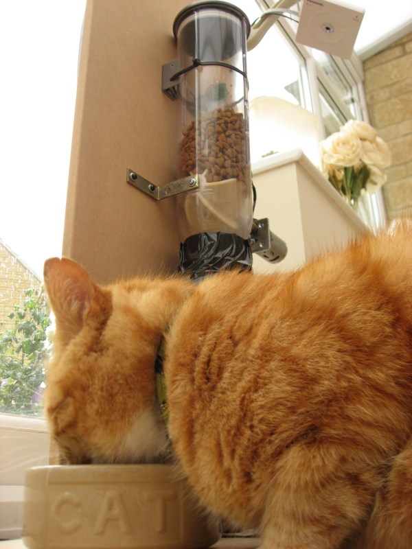 Feeder Cats For Dogs