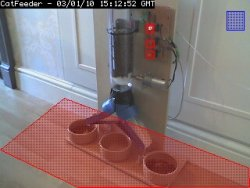 Automatic Feeder Cats Wet Food