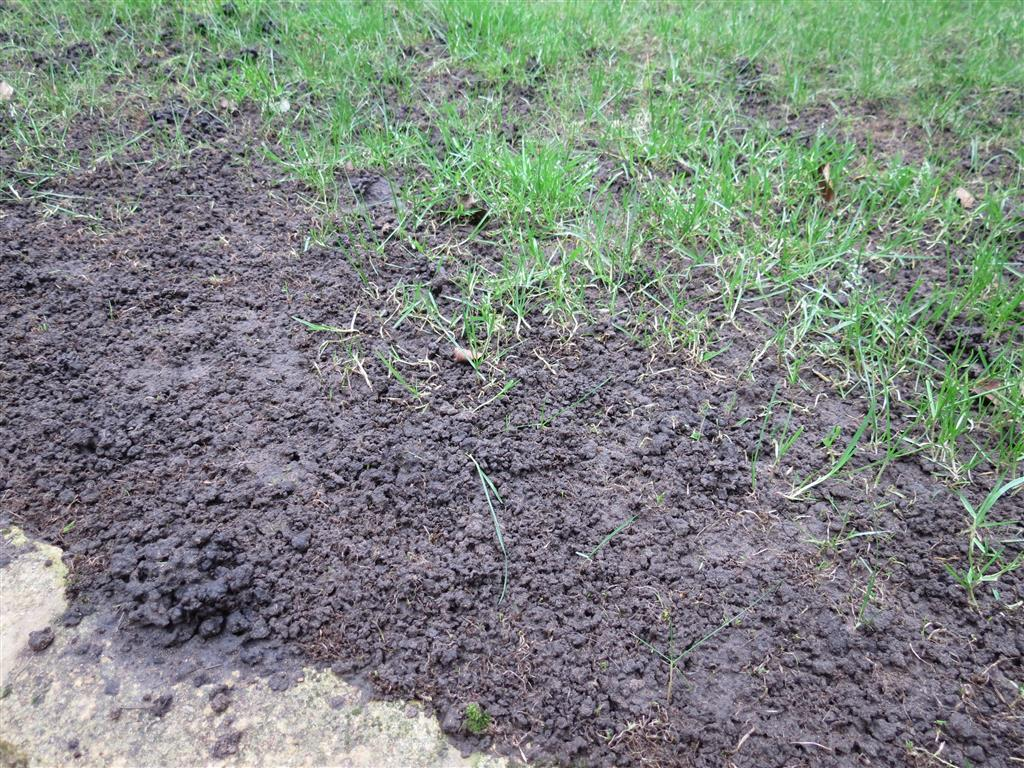 Rolawn Medallion Turf >> Disappearing lawn